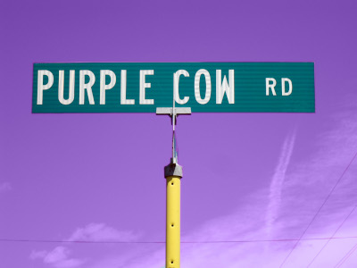 Purple Cow Road